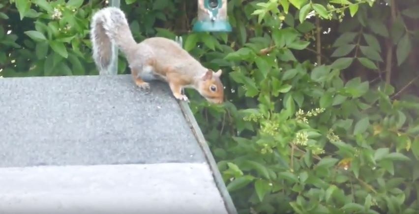 How to keep squirrels out of my garden - How to keep squirrels from digging in garden ...